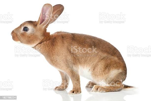 Sniffing rabbit picture id182788224?b=1&k=6&m=182788224&s=612x612&h=myd rswvohucrqhjf xy lo5yr wt7ziiougvtlyyzy=