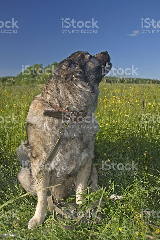 Sniffing the air royalty-free stock photo