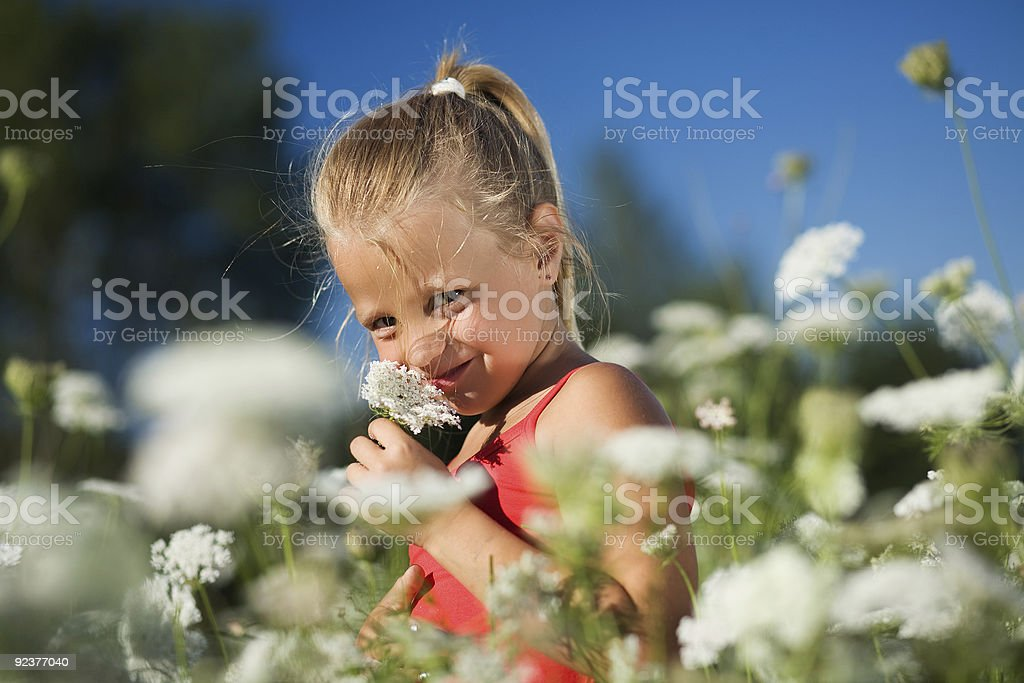 Sniffing the yarrow royalty-free stock photo