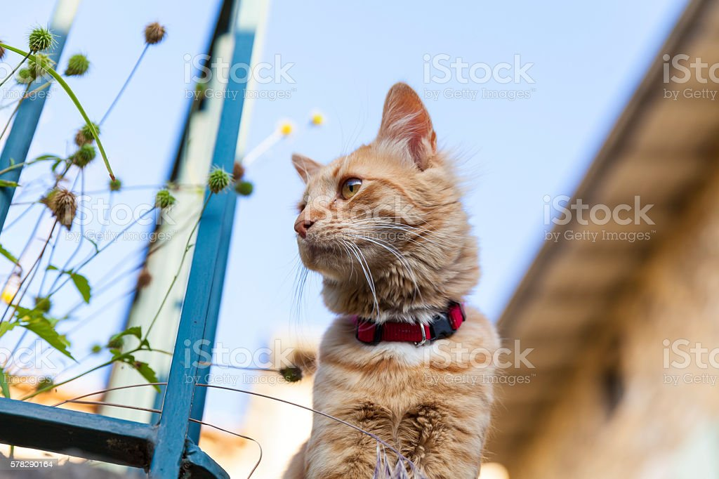 Snoopy cat in the Provence stock photo