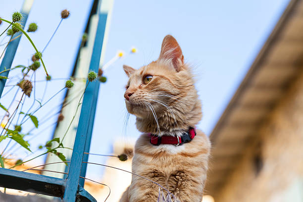 Snoopy cat in the Provence – Foto