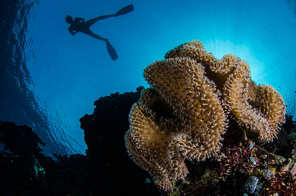 Snorkel Red Sea Coral stock photo