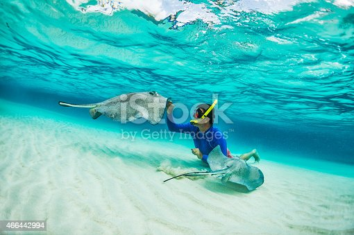 istock Snorkeler playing with stingray fishes 466442994