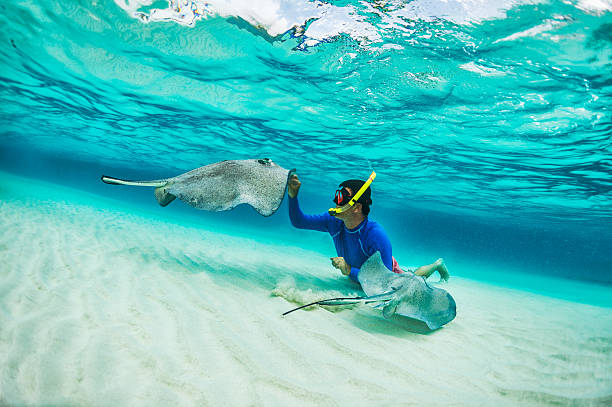 Snorkeler playing with stingray fishes Male snorkeler petting stingray fishes in shallow turquoise water. underwater diving stock pictures, royalty-free photos & images