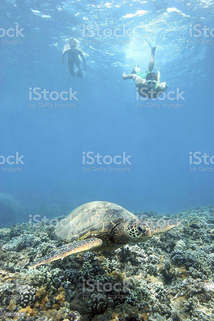 Les plongeurs Nagez avec Tortue de mer photo libre de droits