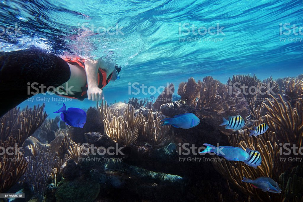 Snorkeling And Caribbean Reef With Fish stock photo