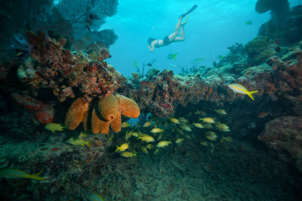 Snorkeling at the Reefs in Key West