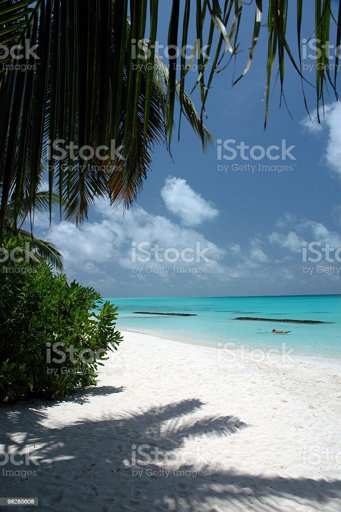 Snorkeling in a Tropical Beach. royalty-free stock photo