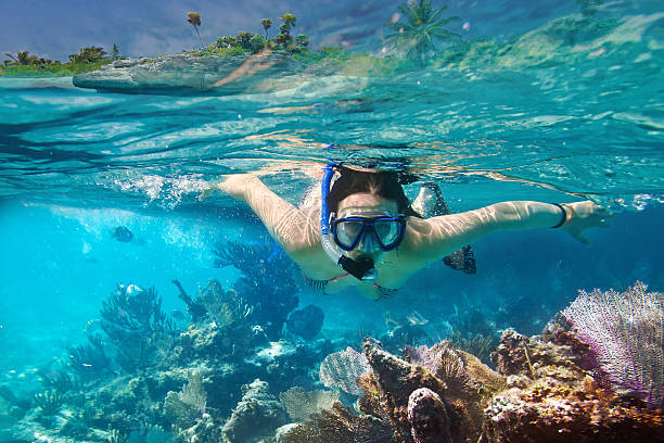 snorkeling in carribean sea - underwater diving stock photos and pictures