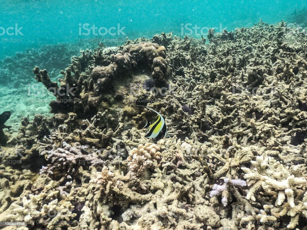 Schnorcheln mauritius Mauritius schönste