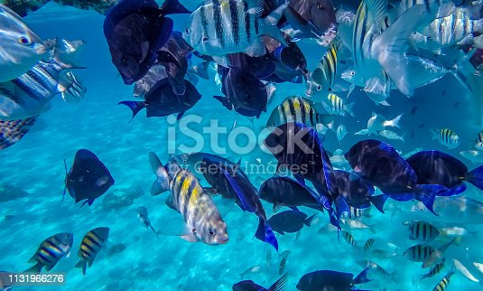 Photo taken during a snorkeling expedition tour in the Cayman Islands.