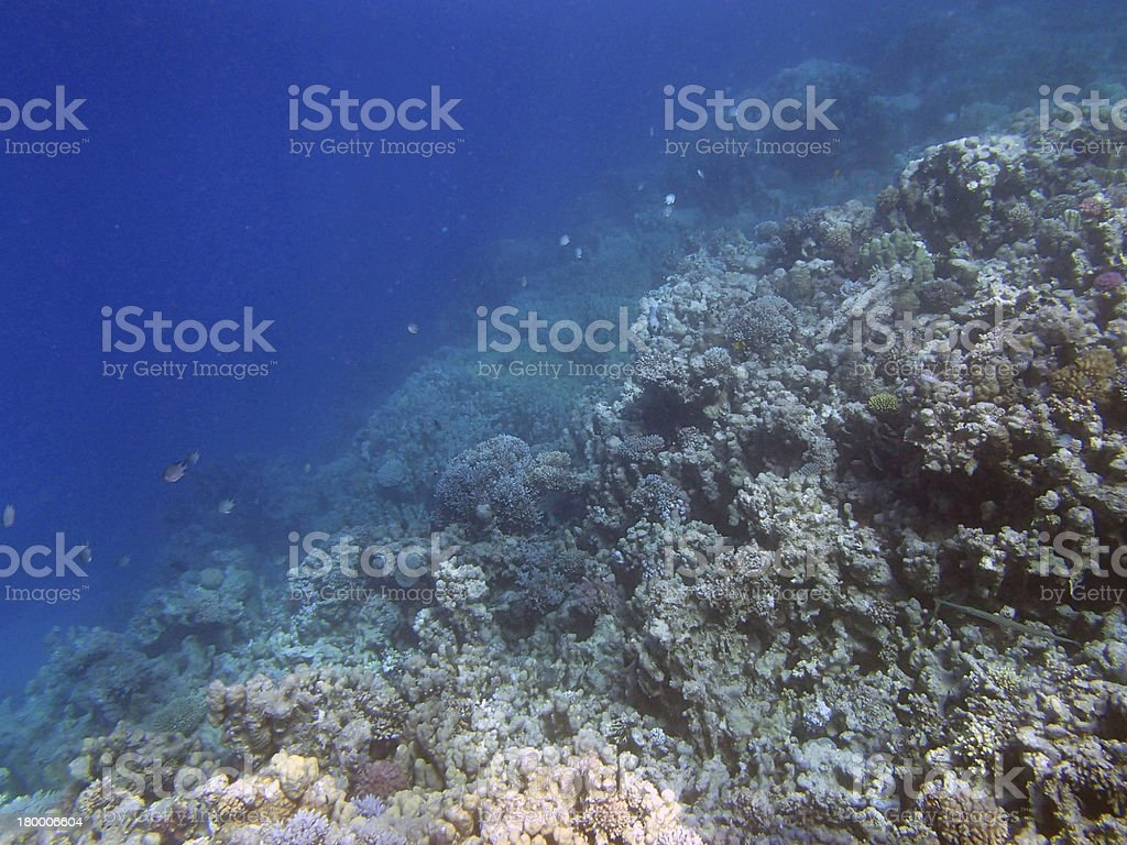 스노클링 in red sea of egypt royalty-free 스톡 사진