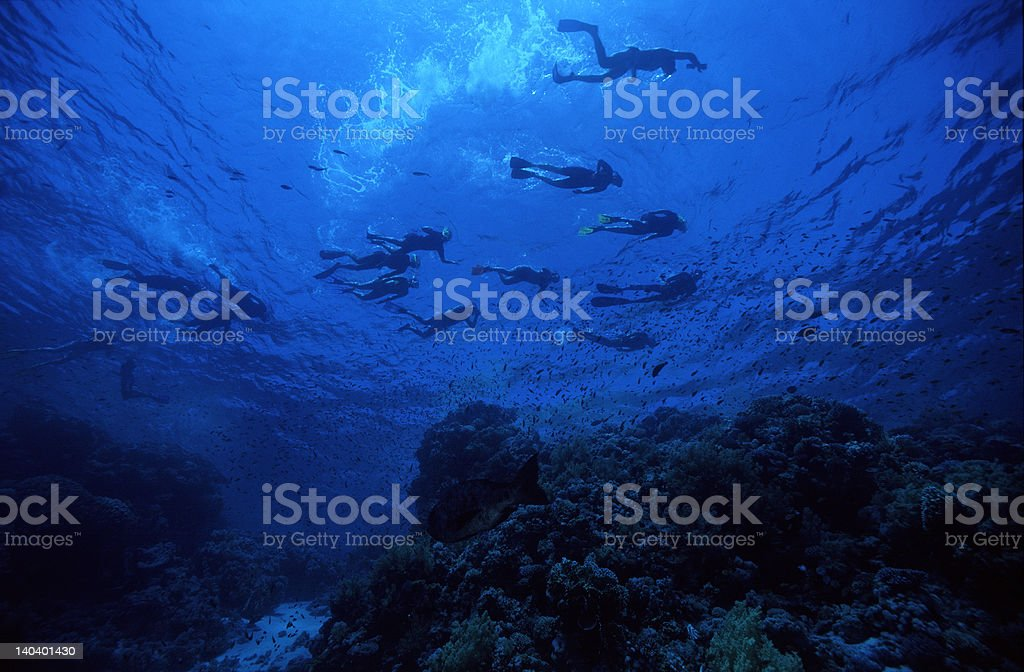 Snorkeling in the surface stock photo