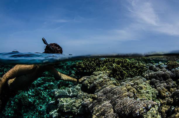 Snorkeling on reef stock photo