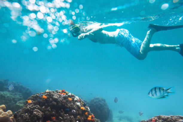 snorkeling snorkeling with tropical beach, active tourism koh chang stock pictures, royalty-free photos & images