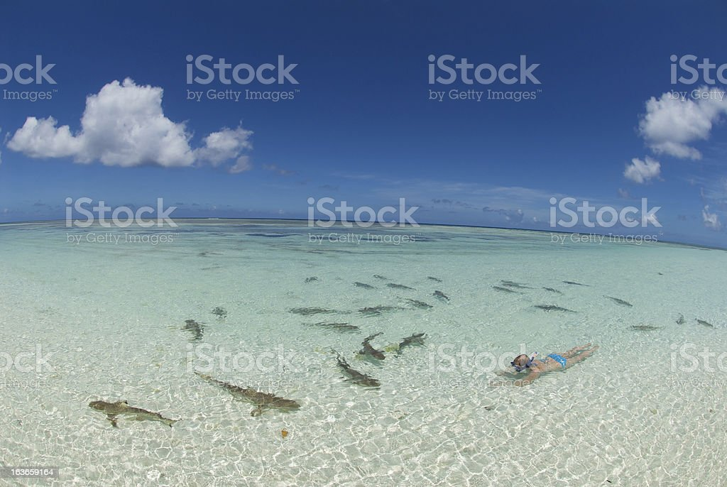 snorkeling with sharks woman snorkels with sharks in clear waters Active Lifestyle Stock Photo