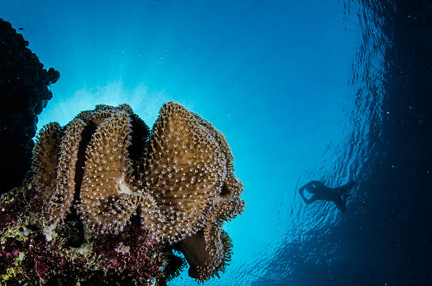 Snorkelling Red Sea Coral stock photo