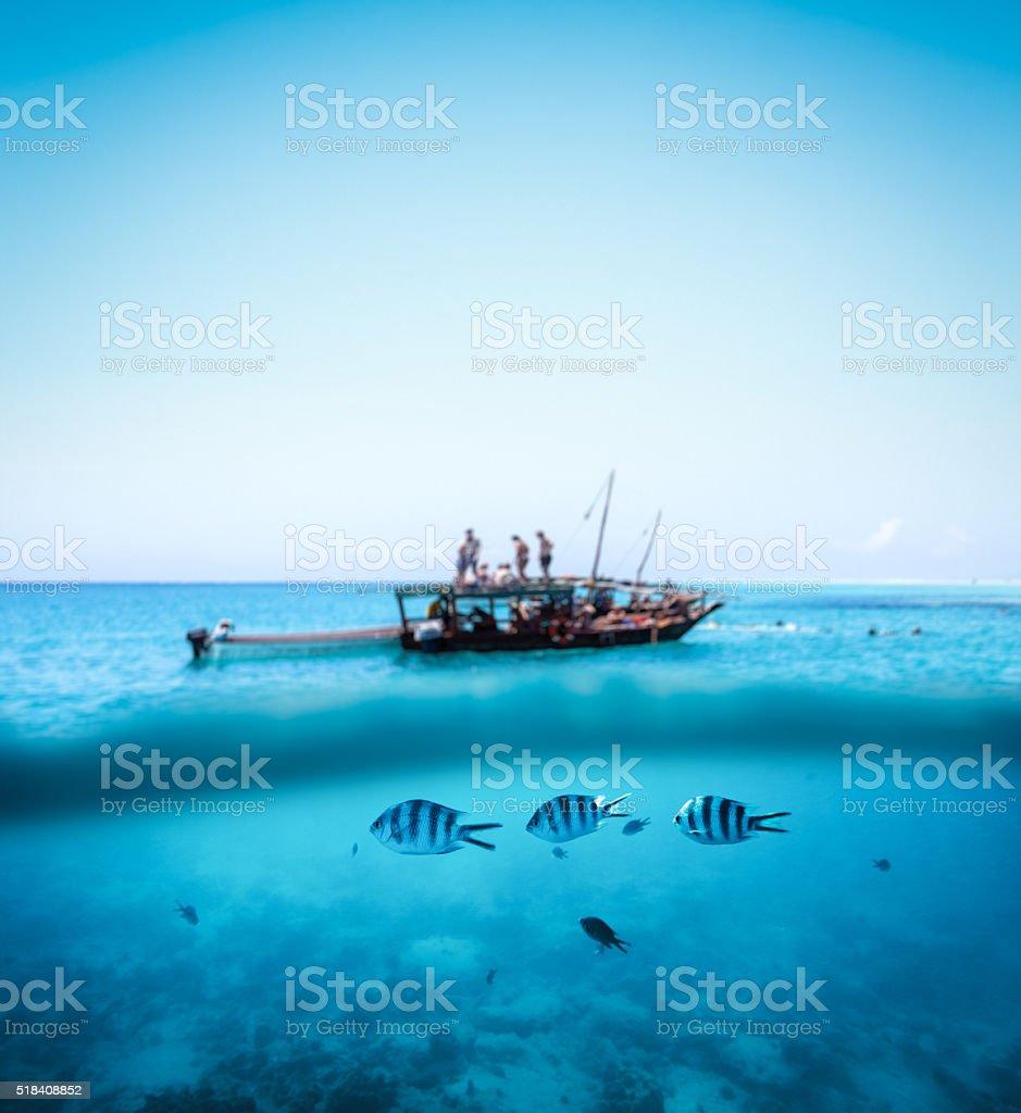 Snorkling On Zanzibar stock photo