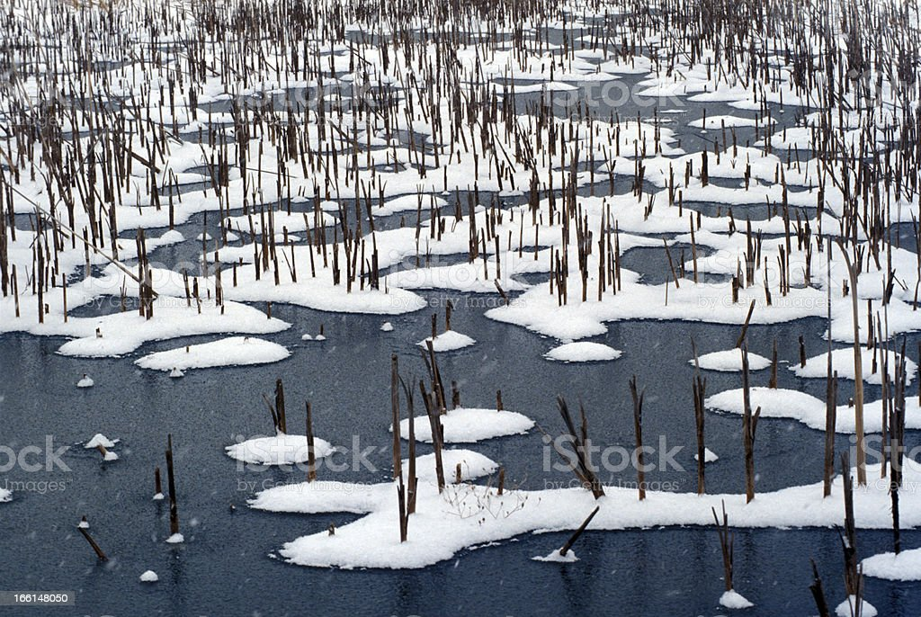 Snow and Cat tail Pond royalty-free stock photo