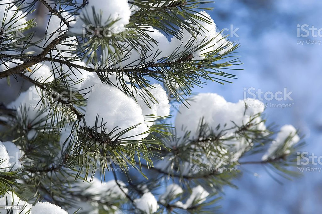 Snow and pine tree branches - sunny winter day royalty free stockfoto