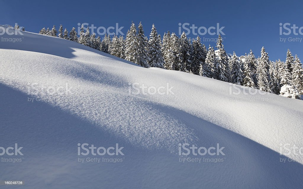 Snow and Trees royalty-free stock photo