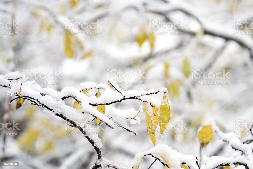 Snow and Winter Landscape royalty-free stock photo