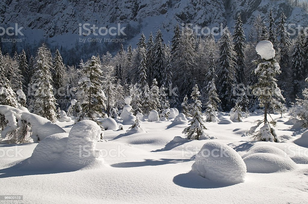 Snow Bubble Forest royalty-free stock photo