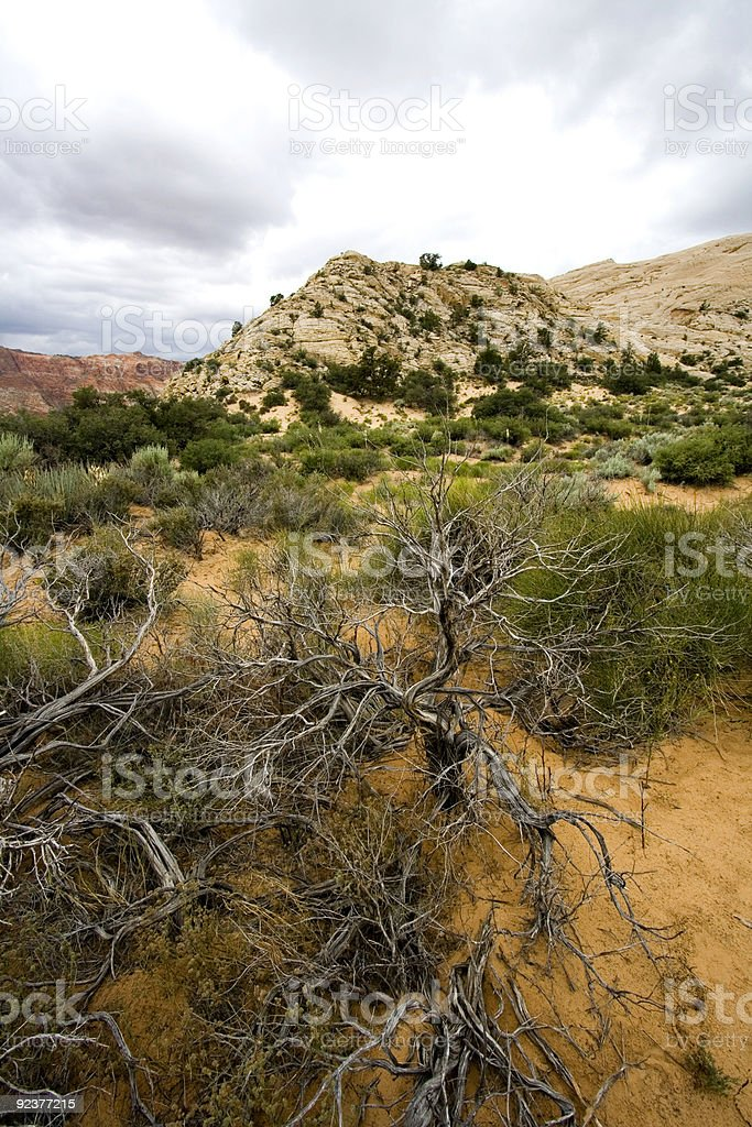 Snow Canyon - Utah royalty-free stock photo