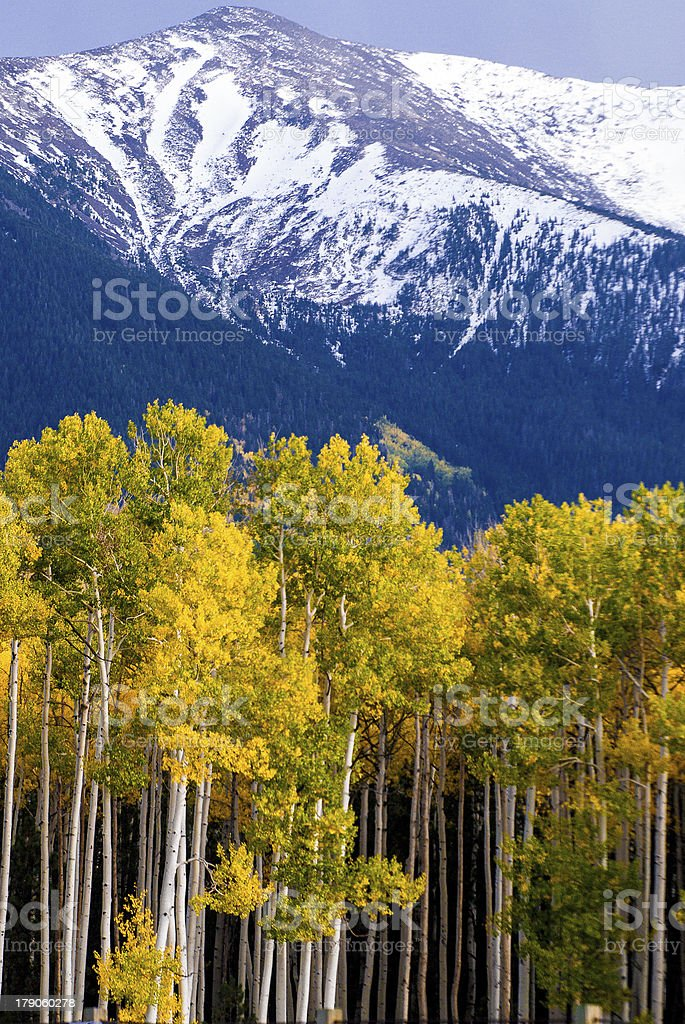 Snow Capped Mountain and Aspen Trees in Autumn stock photo