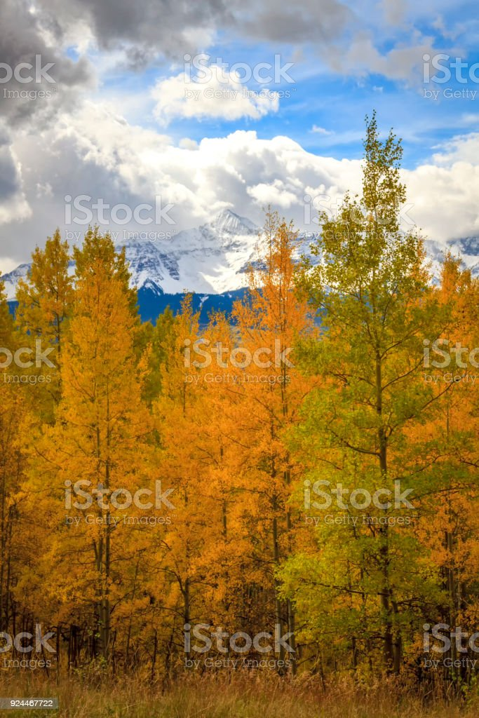 Snow Capped Mountain Peaks with Autumn trees in the foreground in Colorado stock photo