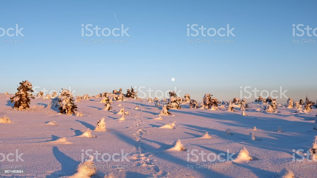 Snow capped pine trees, blue sky, footprints and moon. Winter mountain top view landscape. stock photo