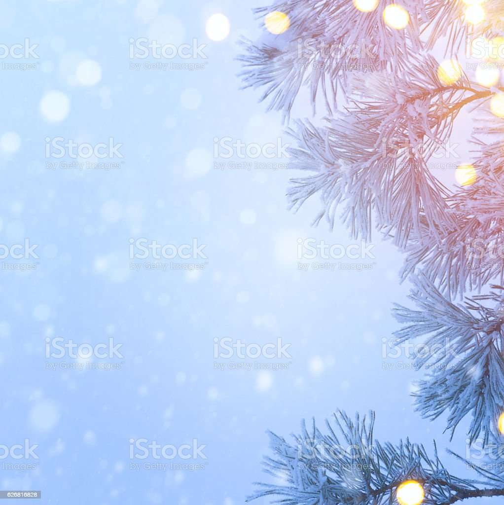 Snow Christmas Tree And Holidays Light Blue Christmas Tree Back Stock Photo Download Image Now Istock