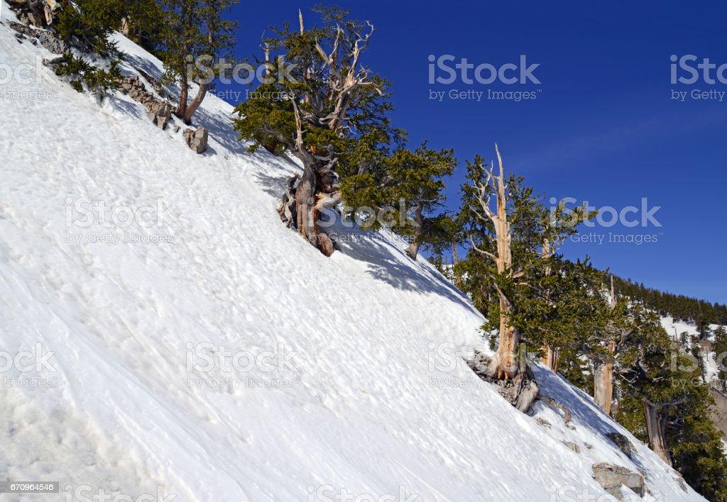 Snow covered alpine terrain on Griffith Peak near Charleston Peak in the Mount Charleston region, popular hiking and climbing spots in the Spring Mountains, near Las Vegas Nevada stock photo