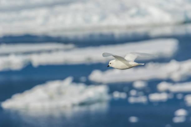 Antarctique montagne enneigée - Photo