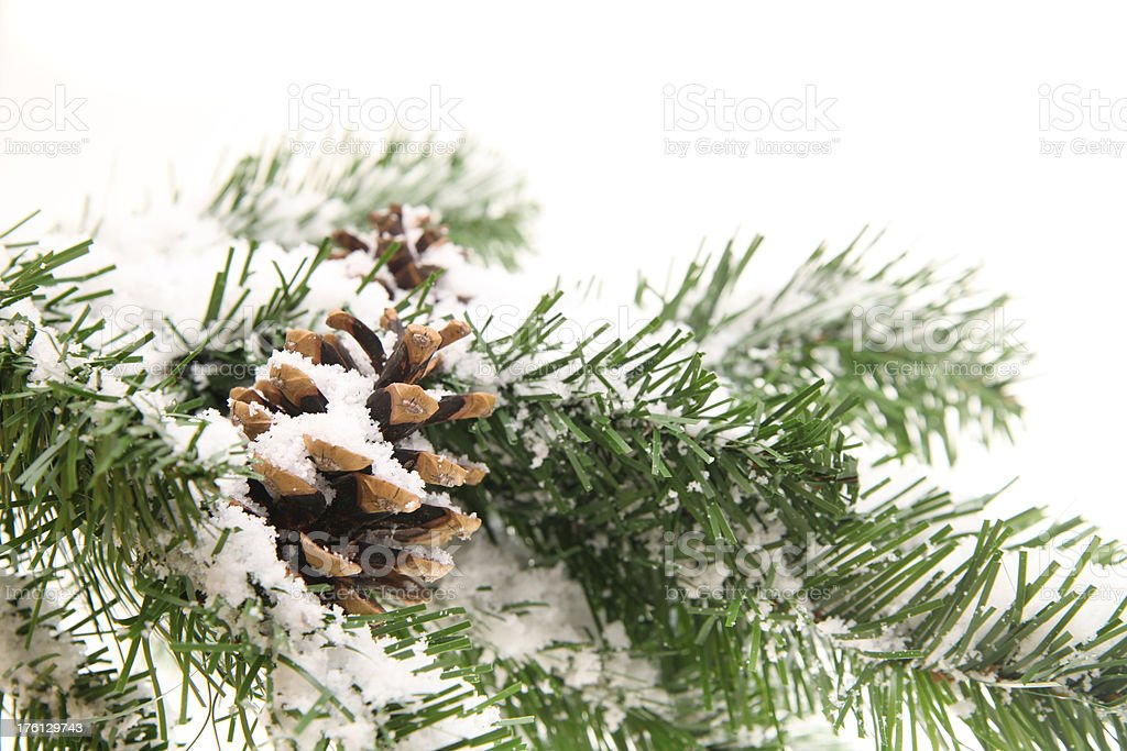 Snow covered branch royalty-free stock photo