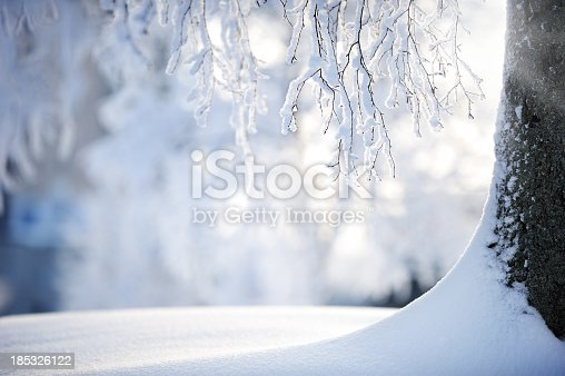 A birch tree trunk in powder snow.