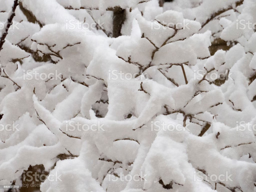 Snow covered Branches stock photo