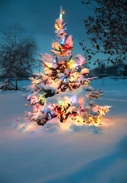 snow covered Chrismas tree stock photo