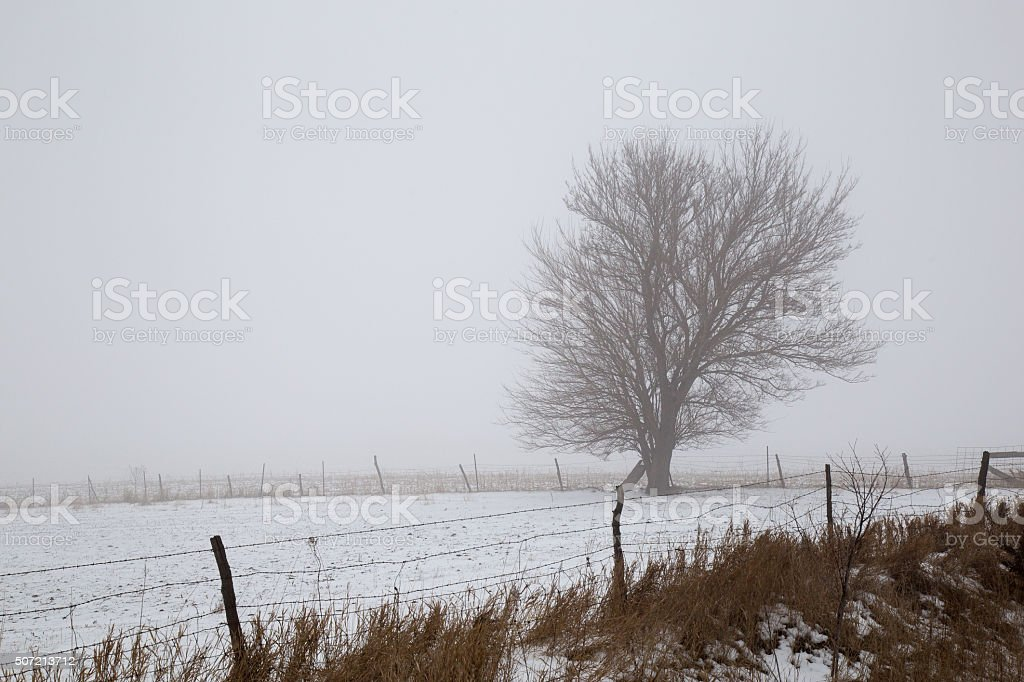 Snow Covered Farm Field With Fence And Tree stock photo