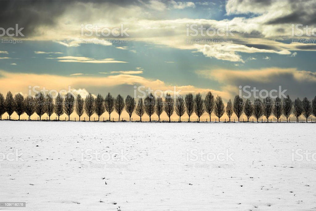 Snow Covered Field Lined with Trees at Sunset royalty-free stock photo