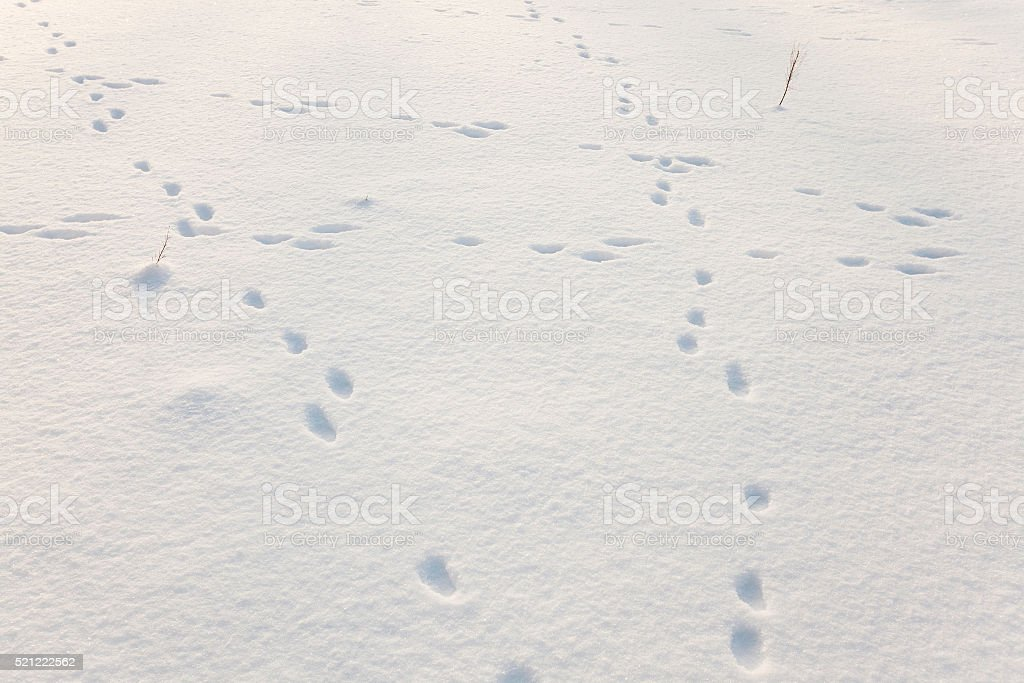 snow covered field stock photo