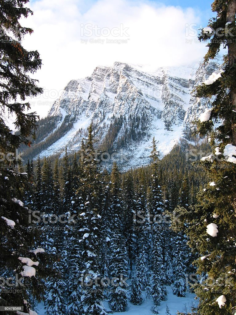 Snow Covered Forest and Mountain royalty-free stock photo