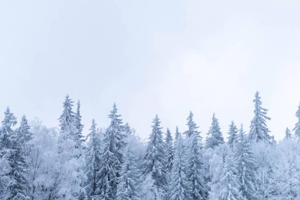 snötäckt skog under snöfall - januari bildbanksfoton och bilder