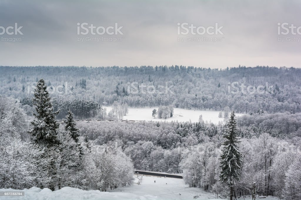 Snow covered forest in Sigulda stock photo