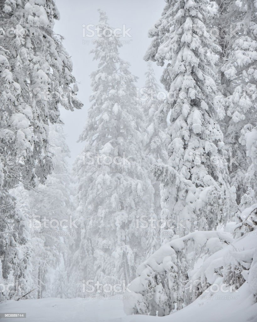 Snow covered forest winter - Royalty-free Blue Stock Photo