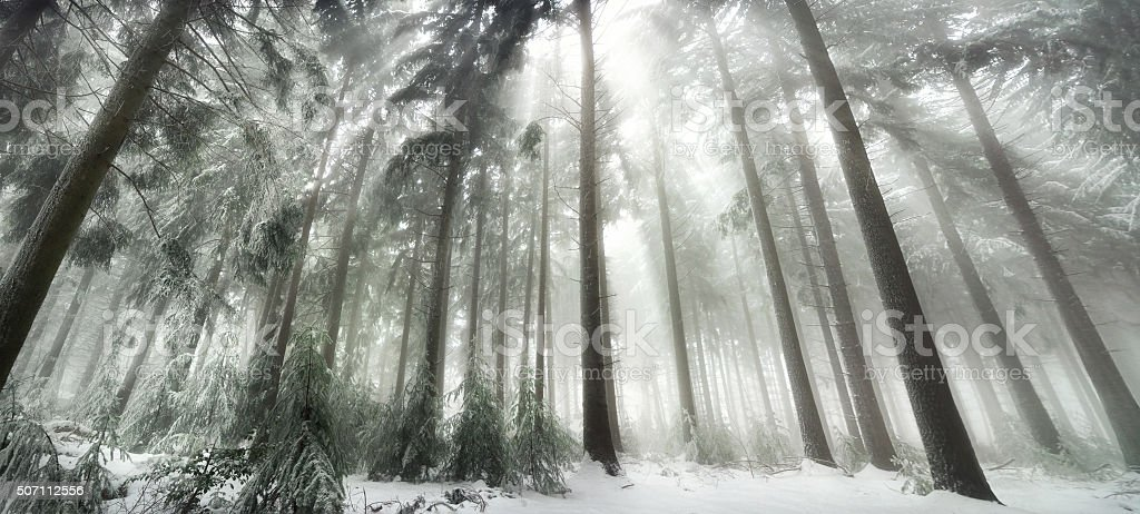 Snow covered forest with magical light stock photo