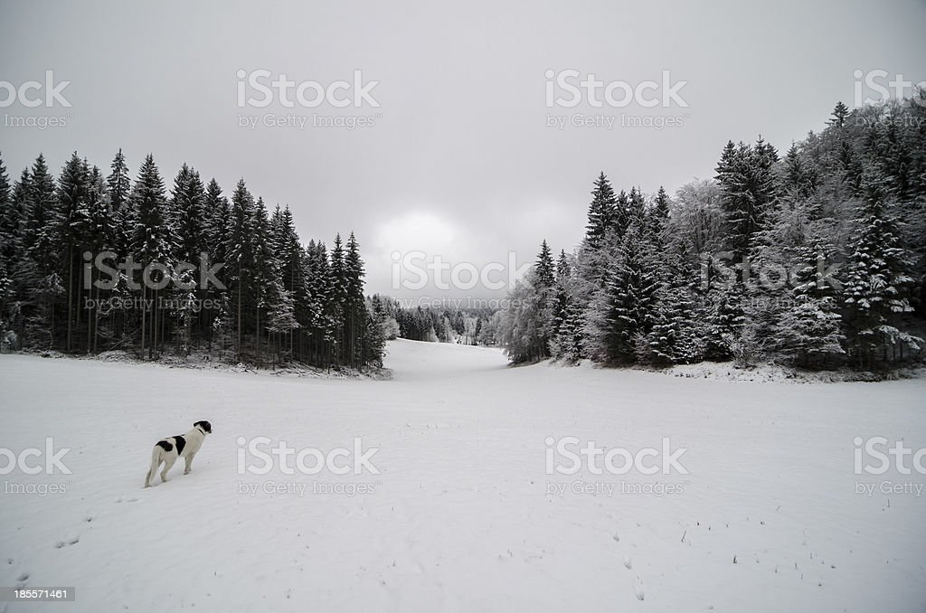 Snow covered meadow with trees on a cloudy day royalty-free stock photo