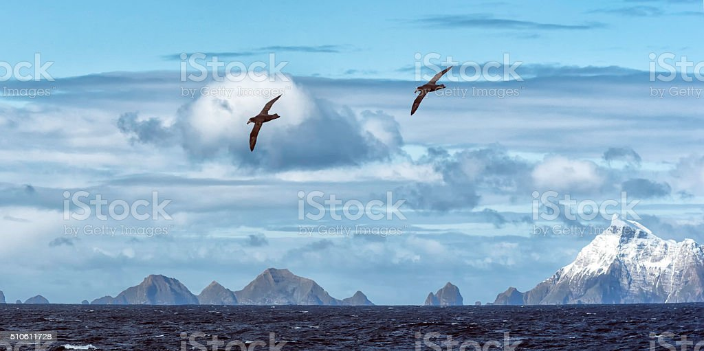Snow covered mountains and albatrosses,  South Georgia Island stock photo