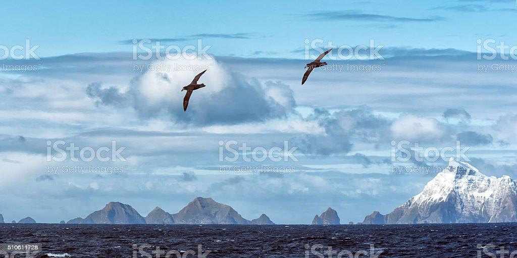 Schneebedeckte Berge und Albatrosse, Süden Georgien Insel – Foto