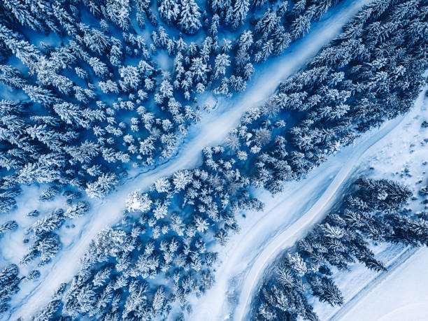 Snow covered pine forest trees during winter stock photo
